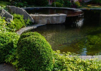 kerti dísztó, kerti tó, tó építése, tervezése, buxus, díszkert építés, díszkert tervezés